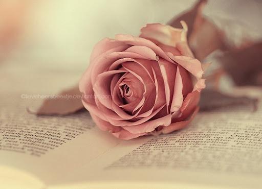 Cartas de amor y frases de amor cortas para dedicar en