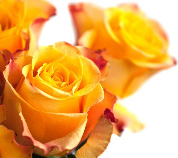 Mensagens de Flores para Facebook - recadopop.com