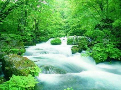 natureza1 Frases de Natureza
