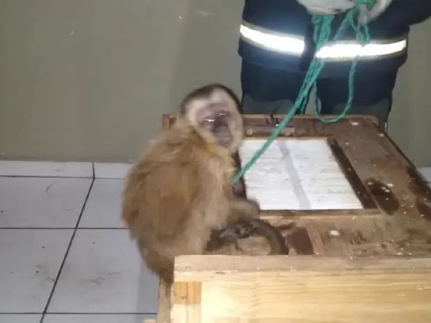 Animal está na sede do Corpo de Bombeiros, em Patos. (Foto: Maurílio Alves / Corpo de Bombeiros)