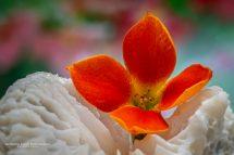 A Beleza da Flor